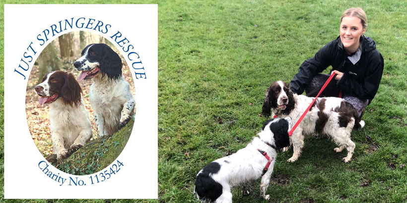 Olivia Davies – Just Springers Rescue – Jellybean's 12 Days of Giving