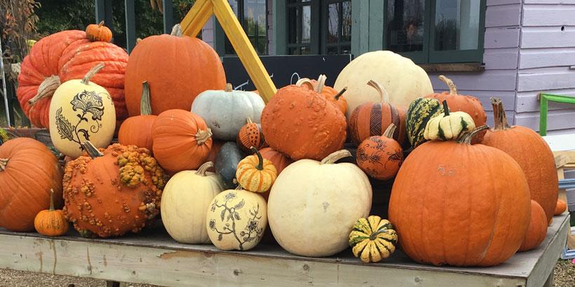 History of Pumpkins